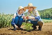 농업, 농부 (농촌직업), 시골풍경, 채소, 채소밭 (경작지), 심기 (움직이는활동)