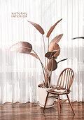 인테리어, 누드컬러, 감성, 트렌드 (컨셉), 자연스러움 (컨셉), 반려식물