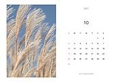 달력, 달력템플릿 (이미지), 새해 (홀리데이), 연하장 (축하카드), 다이어리, 2021, 2021년, 목업, 목업 (이미지), 템플릿 (이미지), 가을, 참억새 (벼과식물)