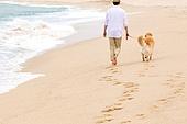 남성, 리트리버, 반려동물 (길든동물), 휴가, 해변, 걷기 (물리적활동)