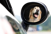 자동차, 운전 (움직이는활동), 여행, 반려동물 (길든동물), 사이드미러