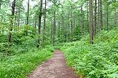 숲, 풍경 (컨셉), 산림욕