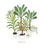 원예 (레저활동), 화분, 식물, 잎, 반려식물, 정원