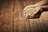 건강식, 건조 (상태), 보리, 곡식 (식물), 통보리, 사람손 (주요신체부분)