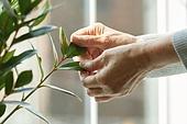 노인여자 (성인여자), 건강관리 (주제), 독거노인 (노인), 외로움 (컨셉), 식물, 쓰다듬기 (만지기)