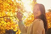 가을, 단풍나무 (낙엽수), 가을 (계절), 11월, 서울 (대한민국), 단풍길, 햇빛, 단풍철 (가을), 단풍잎 (잎)