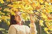 가을, 단풍나무 (낙엽수), 가을 (계절), 11월, 서울 (대한민국), 단풍길, 단풍철 (가을), 단풍잎 (잎)