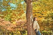 가을, 단풍나무 (낙엽수), 가을 (계절), 단풍잎 (잎)