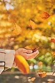 가을, 단풍나무 (낙엽수), 가을 (계절), 낙엽, 낙엽수, 단풍철 (가을), 단풍잎 (잎), 사람손