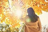 가을, 단풍나무 (낙엽수), 가을 (계절), 단풍길, 단풍철 (가을), 단풍잎 (잎), 성인 (나이)
