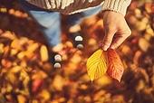 가을 (계절), 감성, 11월, 단풍철 (가을), 소풍 (아웃도어), 단풍잎 (잎), 낙엽, 낙엽관목