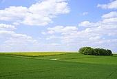 초원,들판,녹색,농촌,농업,축산업,초지,언덕,논밭,구릉,풍경,풍경[경치],전경,실외,독일,해외,여행,유럽,하늘,파란색,구름,뭉게구름,지평선,