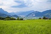 큐스나흐트,Kussnacht,알프스,스위스,해외,여행,유럽,풍경,풍경[경치],전경,실외,산,나무,숲,초원,초지,농촌,농업,마을,시골,건축,주택,