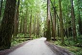 자동차,아메리카삼나무,레드우드국립공원,레드우드,삼나무,세쿼이아,미국삼나무,식물,나무,둥치,고목,국립공원,공원,산,식물,나무,숲,풍경,전경,실외,캘리포니아주,미국,해외,여행,북미,