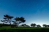 소나무,식물,나무,숲,녹색,풍경,실외,별,밤하늘,비지리,경주시,경북,한국,국내여행,