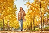가을, 가을 (계절), 11월, 단풍철, 공원, 단풍나무, 은행나무, 은행나무 (낙엽수)