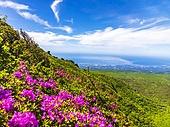 풍경,전경,산,국립공원,나무,숲,등산,하늘,구름,영실,영실기암,영실코스,한라산,서귀포시,제주도,한국,대한민국,꽃,철쭉,바다,마을,해안