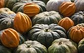 풍경,실외,클로즈업,가을,수확,농작물,채소,호박,할로윈,경남,한국,국내여행,