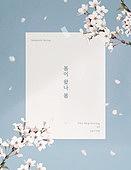 봄, 계절, 편지, 프레임, 꽃, 벚꽃