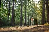 걷기, 조깅 (운동), 운동, 걷기 (물리적활동), 산책길, 스트레칭