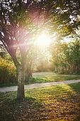 나무, 산책길, 공원, 숲