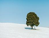 사진, 풍경 (컨셉), 겨울, 겨울축제, 눈송이 (눈), 백그라운드 (주제), 올림픽공원 (스포츠장소), 공원, 숲속 (산림지역), 자연풍경 (교외전경)