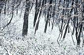 겨울 (계절), 눈 (얼어있는물), 산