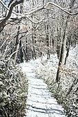 겨울, 산, 쌓인눈 (눈), 등산로, 하이킹 (아웃도어), 산악등반 (클라이밍)