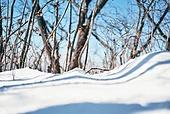 날씨, 겨울, 눈 (얼어있는물), 쌓인눈 (눈), 설경, 쌓인눈, 자연, 고요 (컨셉), 고요한풍경