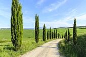 계절,구름,나무,도로,식물,실외,여름,여행,유럽,이탈리아,자연,투스카니,풍경,풍경[경치],하늘,해외