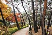 가을,강북구,나무,낙엽,단풍,서울,소나무,솔밭근린공원,공원,식물,실외,아침,잎,자연,침엽수,풍경,풍경[경치],하늘,한국,국내여행