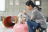 여성, 강아지, 반려동물 (길든동물), 훈련, 도그워커 (직업), 시바이누 (순종개), 기다림 (정지활동), 균형 (컨셉)