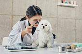 여성, 강아지, 반려동물 (길든동물), 동물병원, 수의사, 진찰 (치료), 동물귀 (동물체), 깨끗함 (좋은상태), 검사 (응시)