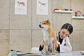 여성, 강아지, 반려동물 (길든동물), 동물병원, 수의사, 진찰 (치료), 치료, 슬개골