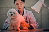 여성, 강아지, 반려동물 (길든동물), 동물병원, 수의사, 진찰 (치료), 치료, 물리치료, 치료용적외선램프 (조명기구)