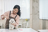 강아지, 반려동물 (길든동물), 애견미용사, 자르기 (움직이는활동), 털 (동물가죽)