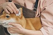 강아지, 반려동물 (길든동물), 애견미용사, 동물귀 (동물체), 소독 (움직이는활동), 펫케어