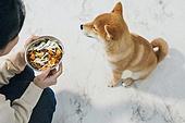 강아지, 기다림, 개사료, 건강식, 사람손 (주요신체부분), 무시 (어두운표정), 편식