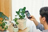 반려식물, 화분, 취미, 사람손 (주요신체부분), 스마트폰, 촬영