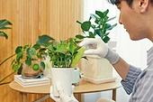 반려식물, 화분, 취미, 미소, 영양제 (건강관리), 시든식물 (식물속성)