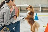 강아지유치원, 도그워커 (직업), 반려동물, 여성, 펫테크 (사회이슈), 돌보기 (컨셉)