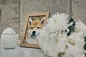 강아지, 장례, 슬픔, 헤어짐 (사랑의어려움)