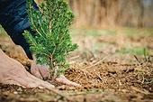 한국인, 묘목, 식목일, 환경보호, 식목 (환경보호), 사람손 (주요신체부분)