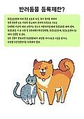 반려동물, 돌보기 (컨셉), 고양이 (고양잇과)
