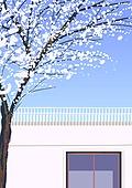 백그라운드, 백그라운드 (주제), 모바일백그라운드 (이미지), 풍경 (컨셉), 휴양지, 나무, 벚나무 (과수)