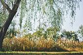 자연, 공원