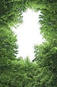 계절,나무,숲,식물,실외,여름,자연,클로즈업,탑앵글,하늘,합성