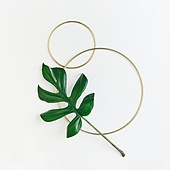 식물, 여름, 잎 (식물부분), 프레임, 몬스테라