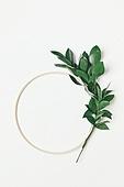 식물, 여름, 잎 (식물부분), 프레임, 루스커스