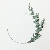 식물, 여름, 잎 (식물부분), 프레임, 유칼립투스나무 (열대나무)